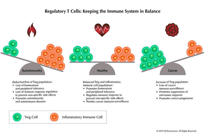 Treg - Keeping Immune System In Balance